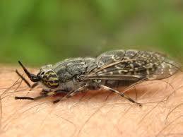 Middelen tegen steekvliegen