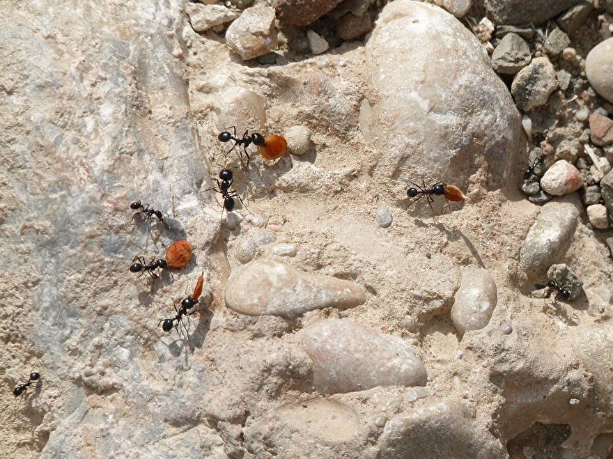 mieren onder terras tegels bestrijden