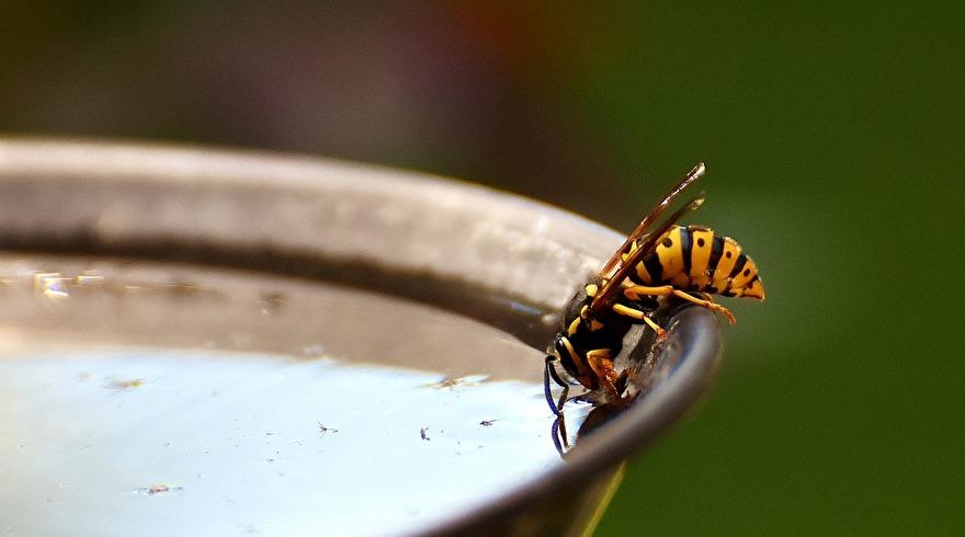 Middelen tegen wespen