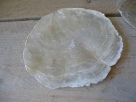 Placuna schelp wit parelmoer