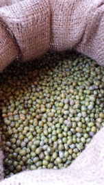 *BIO - USA | Katjang Idjoe / mungbonen / Soja/soya vert / USA / Oogstjaar 2020 / 0,5 kilo