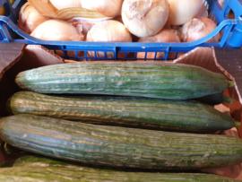 KOMKOMMER |  Teelt bio - Spanje | verpakt | 1 stuks