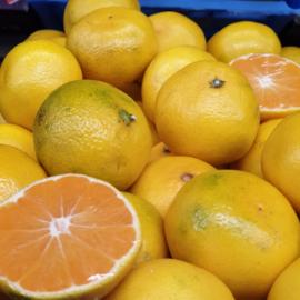 Satsuma mandarijn / Satsuma Iwasaki / teelt: BIO - ITALIE / 1 KILO (ca 8-10 stuks)