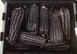 Mais / Morado / zwarte mais /Teelt: regulier -  Peru / 1 stuks, ca 130-140gram