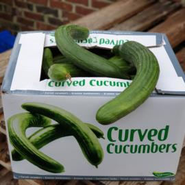 Komkommer krom | zonder plastic | NL | doos 10 kg