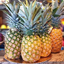 Vliegtuig ananas / natuurrijp geoogst  /Costa Rica /  1 stuks (groot, ca 2200 gram)