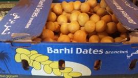Barhi Tak / Bahri / Bari / Verse dadels aan de tak / Peru / doos 2 kilo