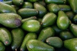 Avocado / Ettinger / teelt regulier - Israel / doos 18 stuks (4kg) / Aanbieding geldig t/m vrijdag 15 november