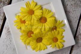 Madeliefjes / eetbare bloemen / schoon geteeld - Israel / 4 bakjes (ca. 30 stuks)