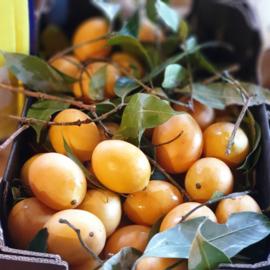 Gandaria    Maprang mango   Plum Marian   teelt: biologisch   Thailand   500gram /levering vrijdag 28 februari