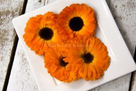 Calendula | Goudsbloemen | Eetbare bloemen /  Israel / 4 bakjes ca. 20 stuks