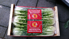 Puntarelle / Lazio / Teelt: biologisch Italië  / 1 krop (ca 0,5 kg)