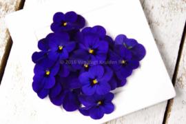 Viooltjes paars | eetbare bloemen | Israel | 4 bakjes (ca. 60 stuks)