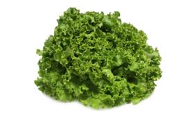 Sla | Insalate gentile | groene zachte krulsla | Emilia-romagna / 1 krop