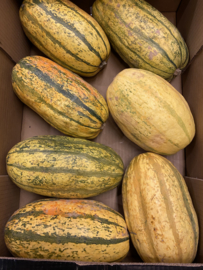 SPAGHETTI POMPOEN | SQUASH POMPOENEN | TEELT regulier - Frankrijk |  per stuk (ca. 1,5kg)