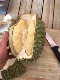 Doerian Mon thong / verse durian / Topkwaliteit en rijpgeplukt, teelt: permacultuur/  Maleisië - Thailand  | 1 stuks ( ca 2 kilo)  | Leverbaar vanaf. donderdag  24 oktober