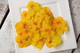 Viooltjes geel | eetbare bloemen | Israel | 4 bakjes (ca. 60 stuks)