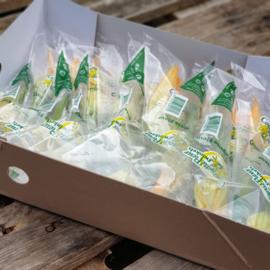 Fleur groen / Courgettebloem met kleine mini groene courgette | teelt: regulier - NL /15 stuks