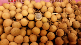 Longan | Kelengkeng | Lengkeng | Dragons Eye | Thailand | 250gram / levering vrijdag 10 april