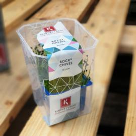 Rockchives  | Koppert Cress - NL | 1 stuks