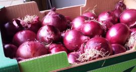 Uien rood | Rode Italiaanse uien | cipolle rosse / Calabrië - Italië / 500g (ca 2-3stuks)