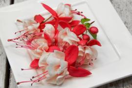 Fuchsia / eetbare bloemen / schoon geteeld - Israel / 4 bakjes (ca. 30 stuks)