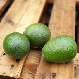Avocado  / soort: Edranol / Onrijp / teelt: regulier- Peru / 2 stuks (ca 2x330gram)