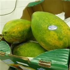 Formosa Papaja / papaya / zoet / halfrijp | Brazilië / 1 stuks (groot, ca 1,3 kilo)