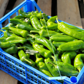 Peperoni friggitelli  |  paprika om te grillen/vullen | Italië-Campanië | 500gram (ca 6-8 stuks)