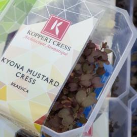 Kyona Mustard Cress | 12 stuks