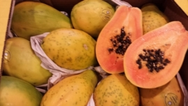 SOLO PAPAJA | EETRIJP | READY TO EAT | PAPAYA | TEELT REGULIER BRAZILIE| 9ST (ca 4 KILO)