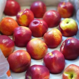 Nectarine / geel vruchtvlees / klasse A / teelt: regulier  / Zuid-Afrika/ doos 18 stuks
