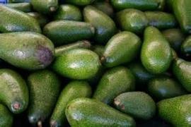 Avocado / Ettinger / teelt: regulier - ISRAEL / 2 stuks (ca 2x 280gram)