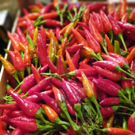 Peperoncino picante vers / verse rode Pepertjes / Italiaanse peperoncini chilipepertjes  / Italië / bosje