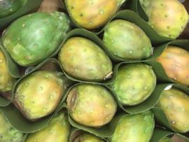 CACTUSVIJG |  Prickly pear | woestijnvijg |TEELT: Regulier COLOMBIA | 1 stuks