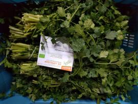 Peterselie / Bladpeterselie / Platte peterselie / Prezzemolo / teelt: bio - Italie  bosje 50gram
