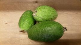 Feijoa / Fejioa / Ananasguave / Guavasteen / teelt: regulier - Peru / doos ca. 2kg