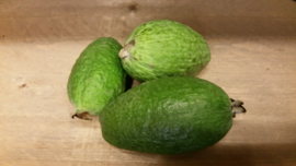 Feijoa guave / Fejioa | Ananasguave / Guavasteen / Colombia/  250gr (2-4 stuks)