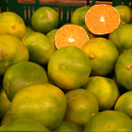 *BIO - ITALIE    Satsuma mandarijn groen   kleine maat   Satsuma Iwasaki / Italië / 1 KILO (ca 12 stuks)