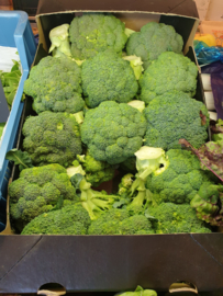 BROCCOLI | TEELT REGULIER - NL | 500gram