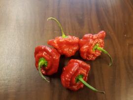 SCOTCH BONNET PEPER ROOD | MUSHROOM MORELIA CHILI | TEELT REGULIER Nederland | 100gram