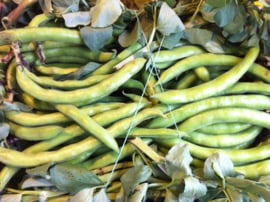 Fave / jonge tuinbonen / Italie-Apulie / 500gram
