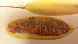 Curuba / banana passionfruit / tasco / tumbo /  teelt: regulier / Colombia /  3 stuks