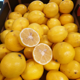 Citroen | Meyer lemon | Meyer citroenen | Meyer limes | Turkije | 500gram (kleine maat, ca 4 stuks)