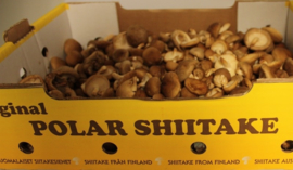 SHI-I-TAKE MINI | TEELT REGULIER-FINLAND | DOOS 2KILO