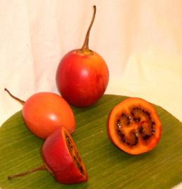 Tamarillo / Boomtomaat / Colombia /24 stuks ( 2,4 kilo)