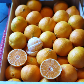 Mandarijn | Clementine  / Spanje / teelt: regulier/ kist 10 kilo (75 stuks) / Voordeelaanbieding geldig t/m vrijdag 15 november