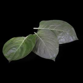 From Age Leaves / Bladeren met kaassmaak / Koppert cress - NL | Bakje 15 blaadjes
