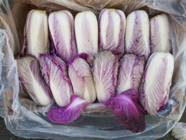 Chinese kool | Rode Chinese kool | Red Napa cabbage | Teelt: bio-Spanje | per stuk