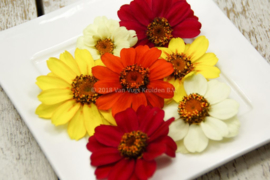 Zinia's / eetbare bloemen / schoon geteeld - Israel / 4 bakjes (ca. 30 stuks)